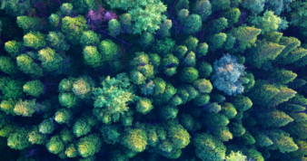 Overhead shot of trees in a forest