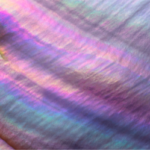 Rainbow colored pearl shell close-up