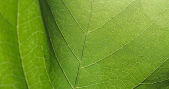 Abstract texture of leaves
